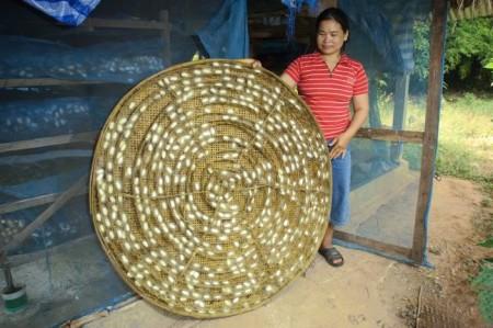 silkworm07