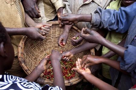 ugandacoffee06