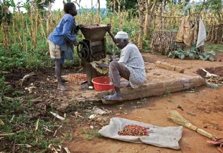 ugandacoffee09