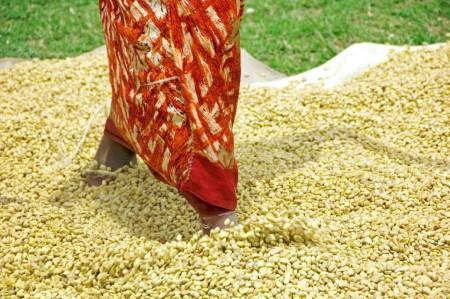 ugandacoffee10