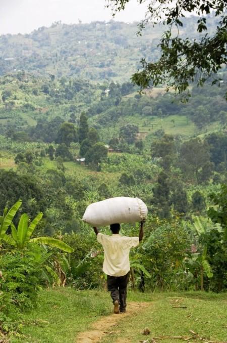 ugandacoffee11