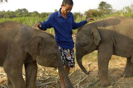 twinelephants09
