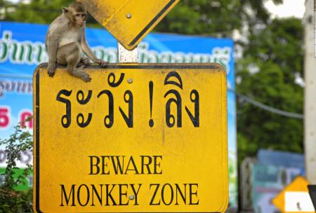 monkeytown-02