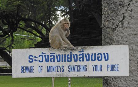 monkeytown-08