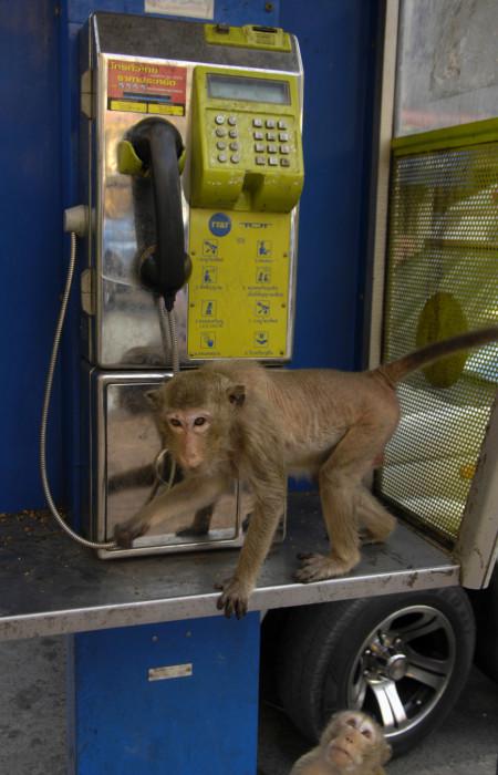 monkeytown-16