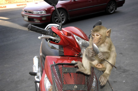 monkeytown17
