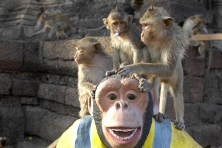 monkeytown19