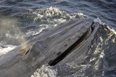 saltwhalewatch-14