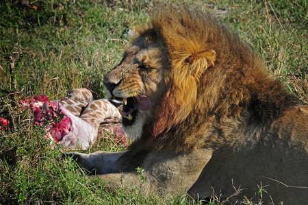 safarischool10lr