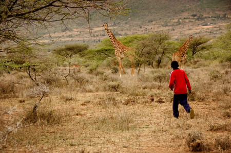 safarischool11lr
