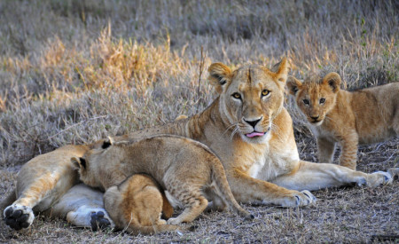 safarischool9lr